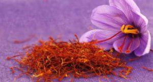 پخش پودر زعفران آترینا