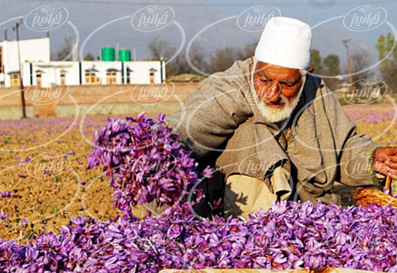 اصلی ترین سایت زعفران توکلی مشهد