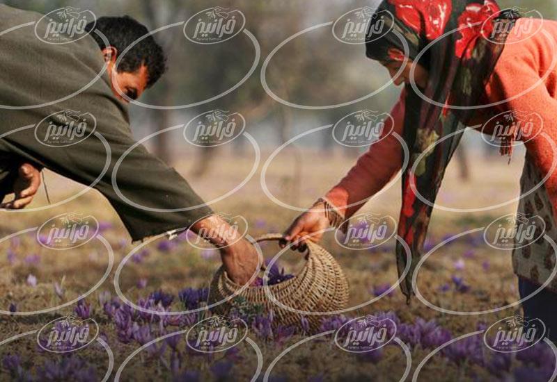 خرید زعفران بهرامن با قیمت استثنایی