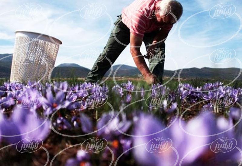 بازار واردات و صادرات زعفران به کانادا
