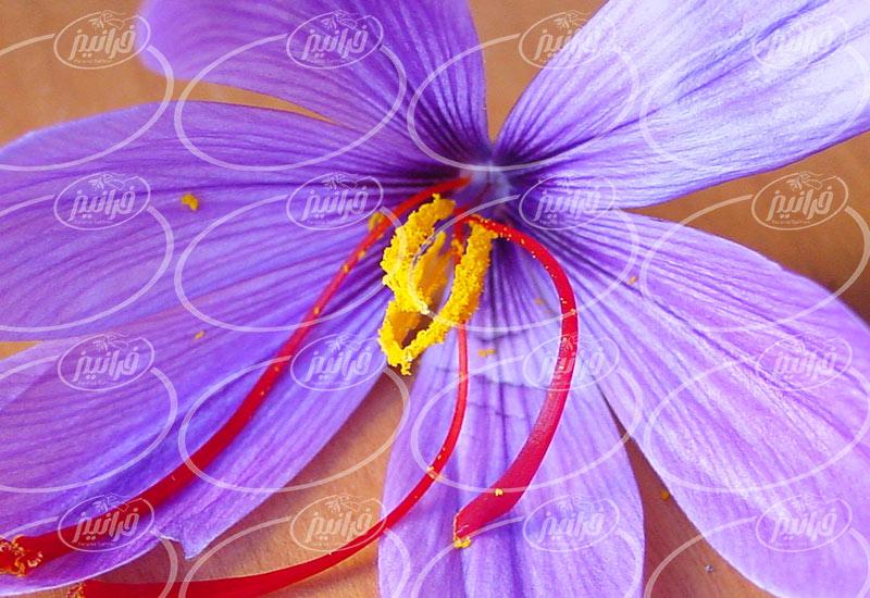 خرید زعفران کیلویی اصل قاینات