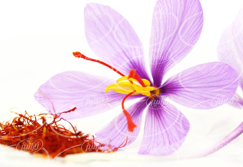 خرید زعفران سحرخیز صادراتی مستقیم از کارخانه