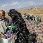 فروش آب زعفران و ارسال آن به اروپا