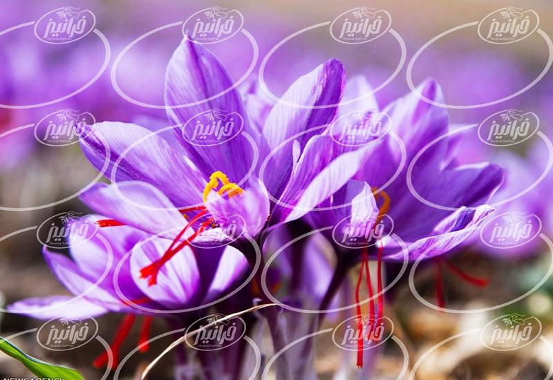 خرید اسپری زعفران 100 گرمی به قیمت کارخانه