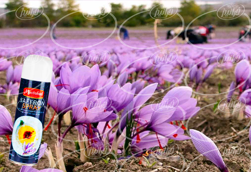 صادرات اسپری زعفران مصطفوی در ارمنستان