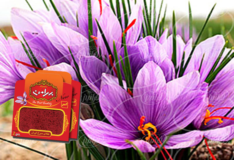 فروشگاه پودر زعفران بهرامن یک گرمی