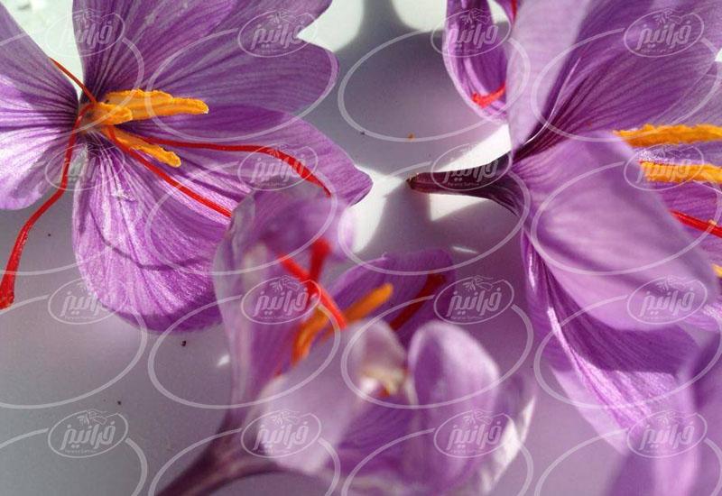 خرید حجم بالا از کارگاه تولیدی رنگ زعفران ایرانی
